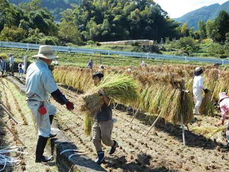 農泊 稲刈り体験