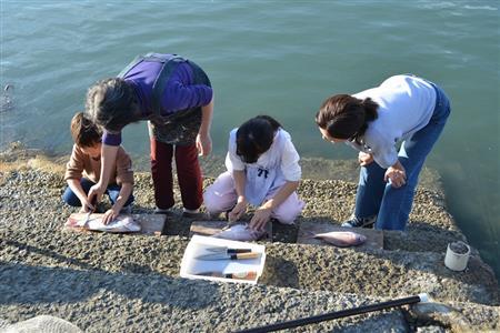 農泊 魚裁き体験